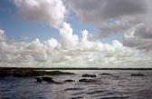 Farne Islands -002