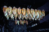 Whitby_Kippers-005