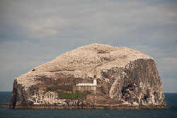 Bass_Rock,_Lothian_-004.jpg