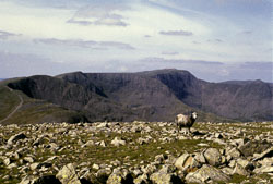 Fairfield_Horseshoe-021.jpg