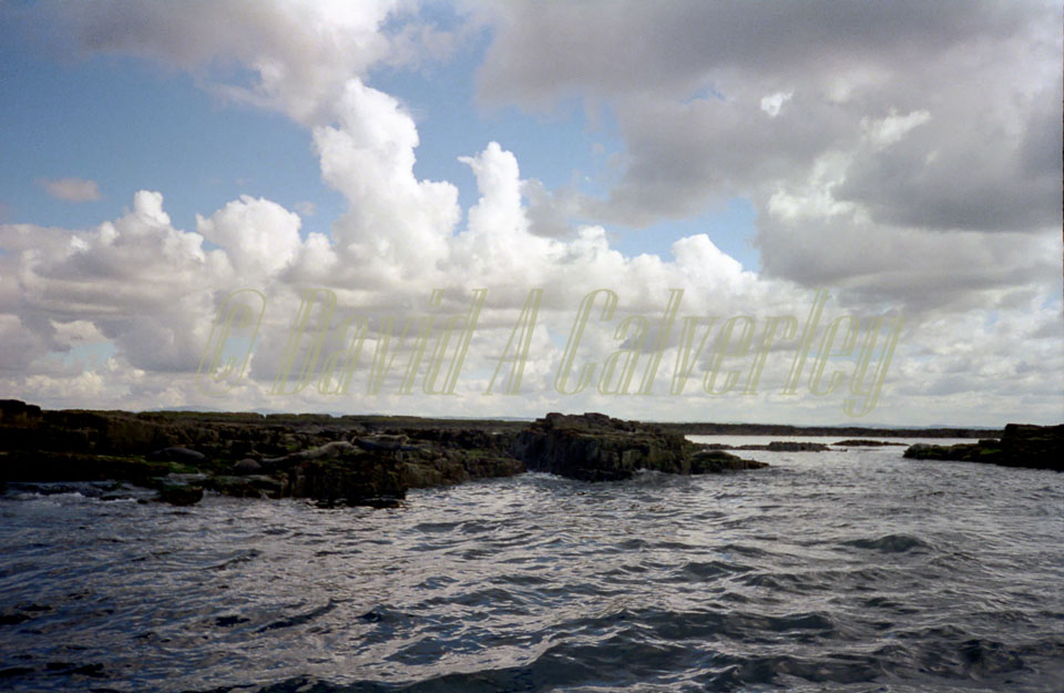 Farne_Islands_-003.jpg