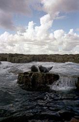 Farne_Islands_-005.jpg