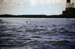 Farne_Islands_025.jpg