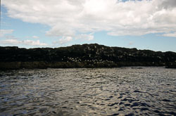 Farne_Islands_055.jpg