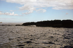 Farne_Islands_057.jpg