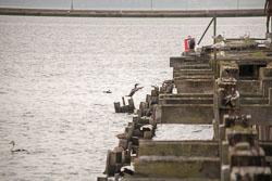 Leith_Docks_-022.jpg