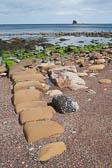 Saltwick Bay -010