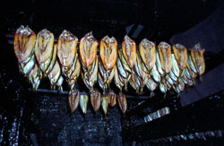 Whitby_Kippers-005.jpg